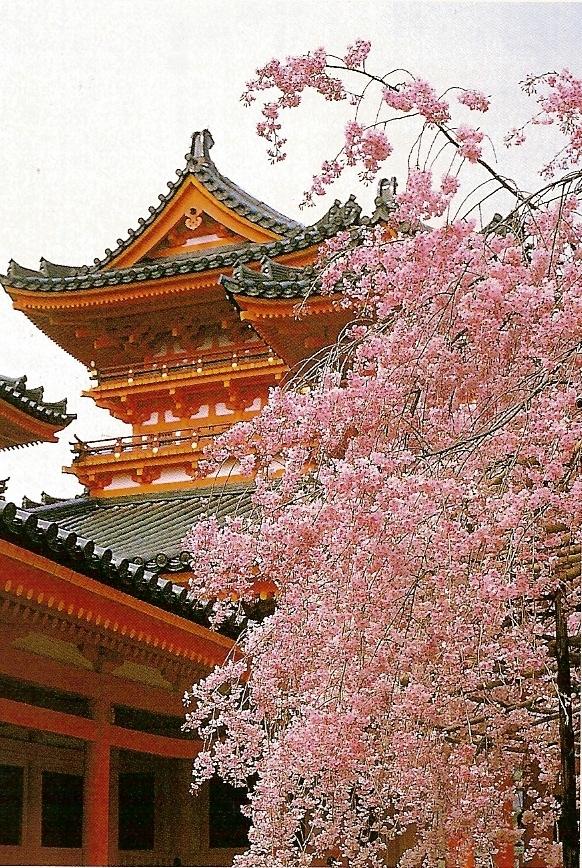 japonia-sarbatoarea-florii-de-cires