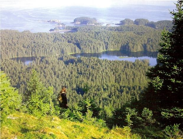 insula-spruce-laguna-calugarului2