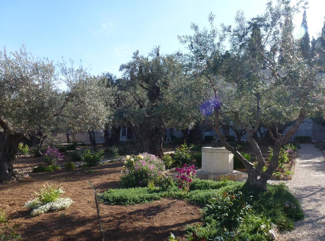 04. Maslinii din Gradina Getimani -1