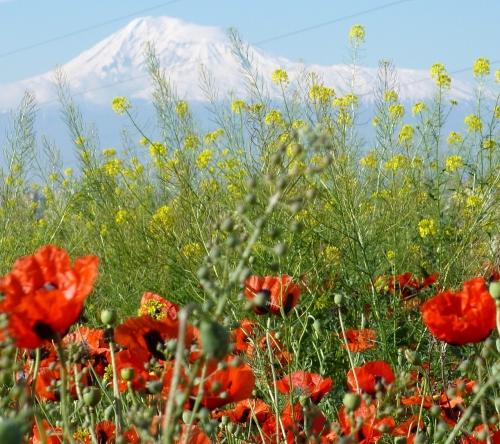 Muntele Ararat(1280x1139)