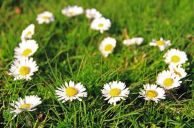 fiori-primavera_ng2